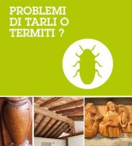 tarliTermiti